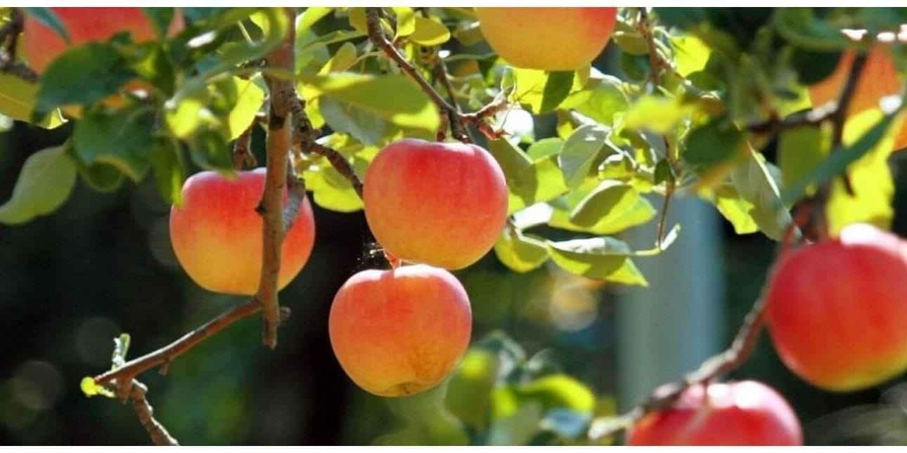 Fruits and Trees Nursery Netherland